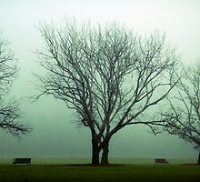 One foggy morning by Sangeeta