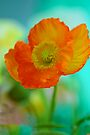 Impressionistic Poppy by Renee Hubbard Fine Art Photography