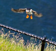 coming in to land by lukasdf