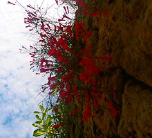 Flowers drop over a rock wall by kirstyrose