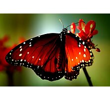 ~Just like a butterfly... Photographic Print