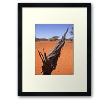 Dwarf Bearded Dragon Framed Print