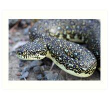 Diamond Python Art Print