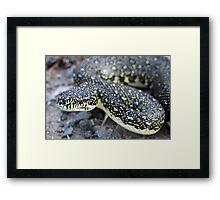 Diamond Python Framed Print