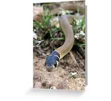 Eastern Brown Snake Greeting Card