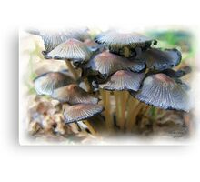 Shrooms Canvas Print