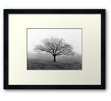 A tree in the fog at Ruffey Lake Park Framed Print