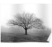 A tree in the fog at Ruffey Lake Park Poster