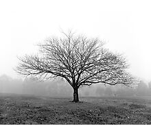 A tree in the fog at Ruffey Lake Park Photographic Print