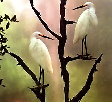 Roosting Egrets by Stephen Warren