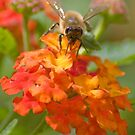 A Tiny Bee by Regenia Brabham