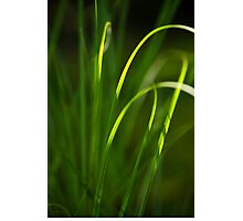 Sun Kissed Grass Abstract Photographic Print