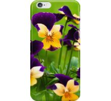 Colorful Viola Flowers iPhone Case/Skin
