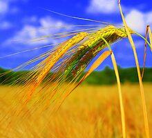 Barley Bright by Sally J Hunter