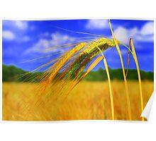 Barley Bright Poster