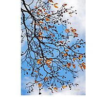 Beautiful Tree Abstract Photographic Print