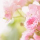 Rose collection 2 by aMOONy