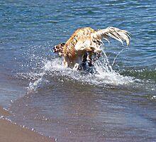 Making a Splash by PPPhotoArt