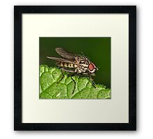 Fly on the edge Framed Print