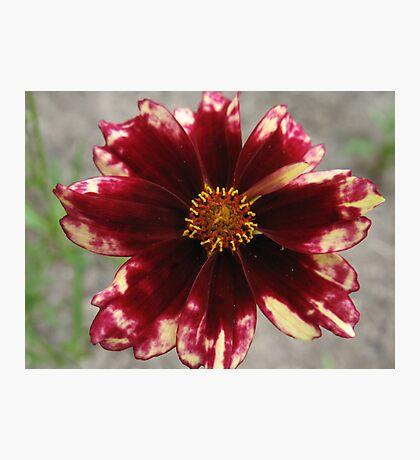 Tie-Dye Flower Photographic Print