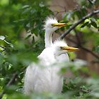 Young Egrets 271 by Brenda Loveless