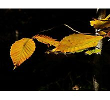 Nova Scotia Leaf Monster Photographic Print