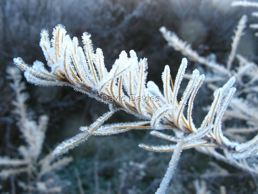 A Cold and Frosty Morning by David Davies