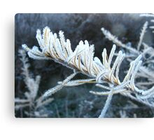 A Cold and Frosty Morning Canvas Print