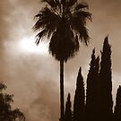 Beverly Hills by Courtney Tomey