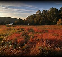 Fall Morning Golden Hour by Tim Holmes