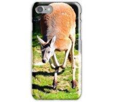 Leaping Kangaroo iPhone Case/Skin