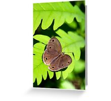 Little Wood Satyr Butterfly Greeting Card