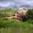 Sleepy Time by Gary Buchan