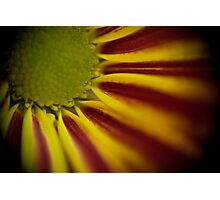 Bokeh Flower Photographic Print