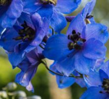 Sapphire Blues and Pale Greens - a Showy Delphinium Sticker