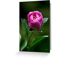 Pink Peony Flower Greeting Card