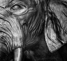 Elephants Eye by Tim Riis