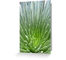 Silver Spines Greeting Card