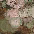 Multi Colored Lichen on a Tree Trunk in the Guatemalan  Jungle  by Heather Friedman