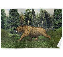 Smilodon (Saber Tooth Tiger) Poster