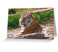 Tiger #2 - Philly Zoo  Greeting Card