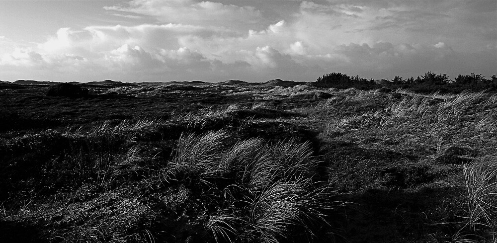 Dunes of Denmark  by Jan  Postel