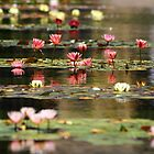 PEACH LOTUS by fsmitchellphoto