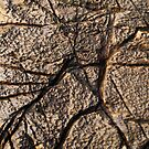 Rock Art I by Dr Andy Lewis