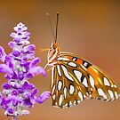 Gulf Fritillary by Shelley Neff
