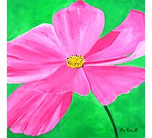 A Pink Flower Photographic Print