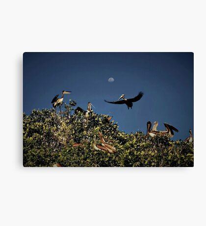 Pelican Moon Canvas Print