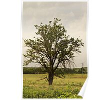 Lone tree near Oz Poster
