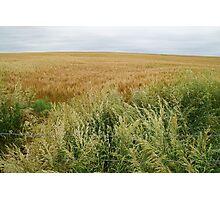 A varied field near Oz. Photographic Print