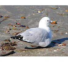 Lone Seagull Photographic Print